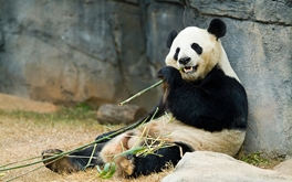 Panda Cudler: Best job in the world?